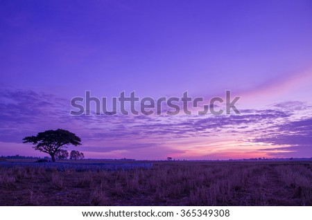 silhouette big tree with the vibrant sky before the sunrise.  - stock photo