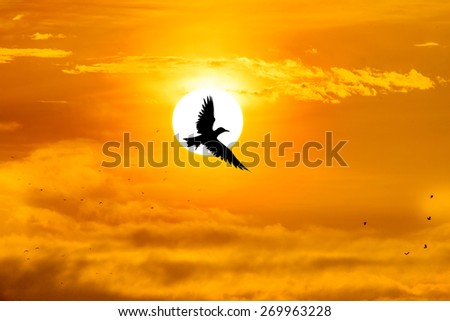 silhouette bird and the sun - stock photo