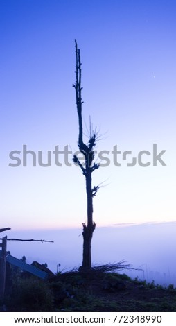 silhouette branch of tree