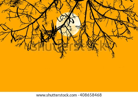 Silhouette branch of tree in color of the moonlight isolated on yellow background