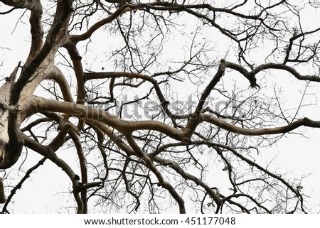 Silhouette dead wood branches black and white high contrast photography from nature
