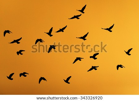 silhouette dove on a background of a sunset