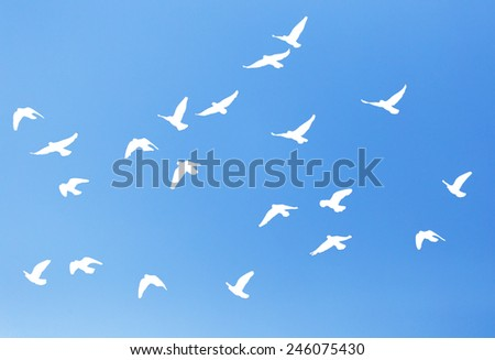 silhouette dove on a background of blue sky - stock photo