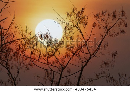silhouette dry tree with sunset, selective focus