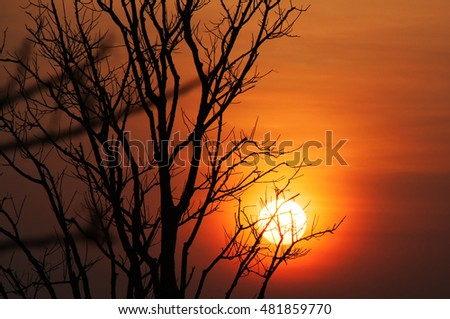 silhouette dry tree with sunset, subject is blurred