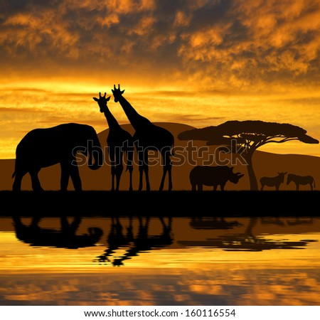 Silhouette elephant,giraffes,rhino and zebras in the sunset  - stock photo