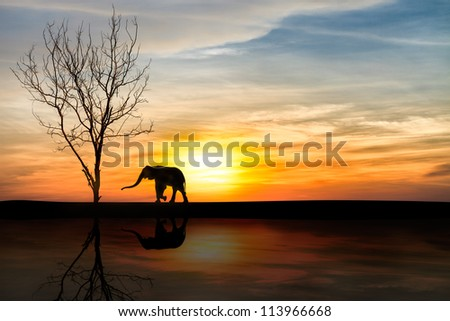 Silhouette elephants over sunset with reflection - stock photo