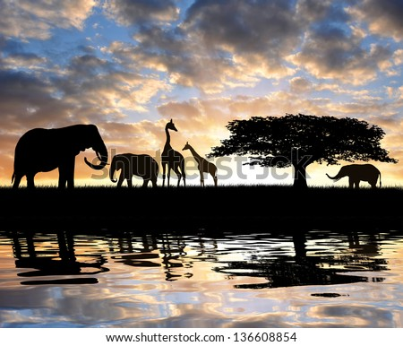 Silhouette elephants with giraffes in the sunset - stock photo
