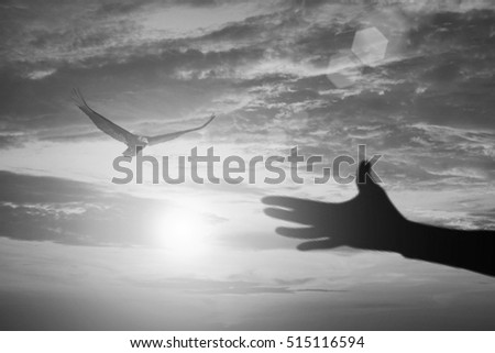 silhouette Hand releasing a bird into the sky made with filter effect