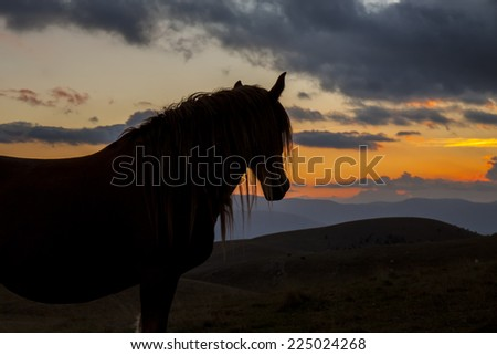 Silhouette horse in a sunset background