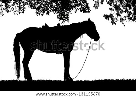 silhouette horse stands on grass under tree isolate on white background - stock photo