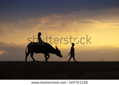 Silhouette image of a Children cattle, farmer boy and his buffalo back home in sunset.