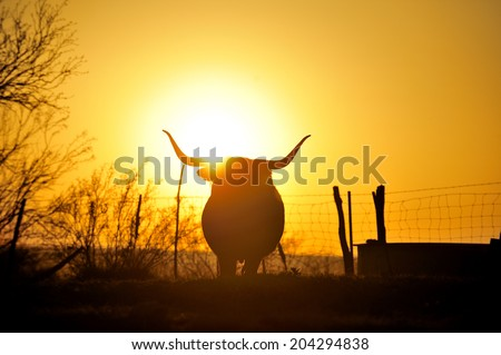Silhouette image of Texas Longhorn in sunset - stock photo