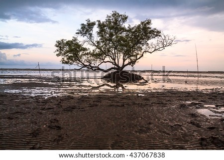 Silhouette,Lamphu tree of dead  over the sea sunrise in background.beautiful tree dry landscape big one over the sea sunset  Image selective focus at the dead tree. pastel concept. - stock photo