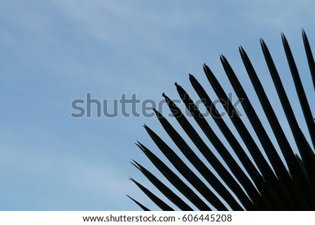 Silhouette leaf under blue sky