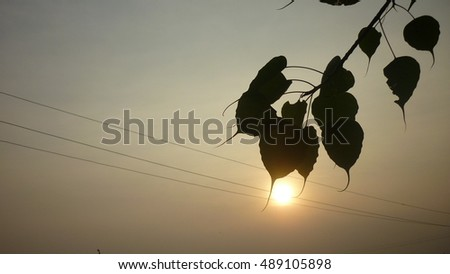 silhouette leafs