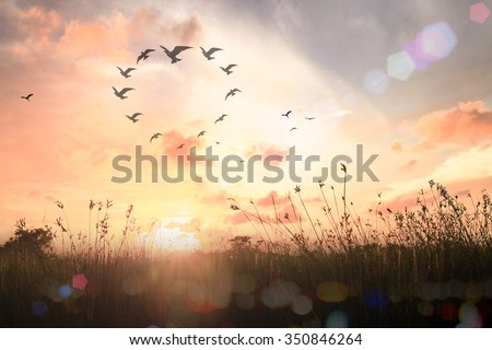 Silhouette many birds flying in shape of heart. Christmas Card Happy New Year 2016 Background Environment Ecology CSR Sync Hope Love Health Care Team Unity Community Volunteer Faith One Family concept - stock photo