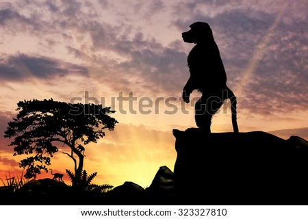 Silhouette monkey baboon on the hill at sunset savanna