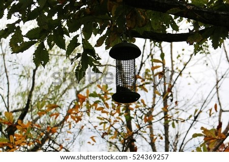 Silhouette of a bird feeder hanging on the tree