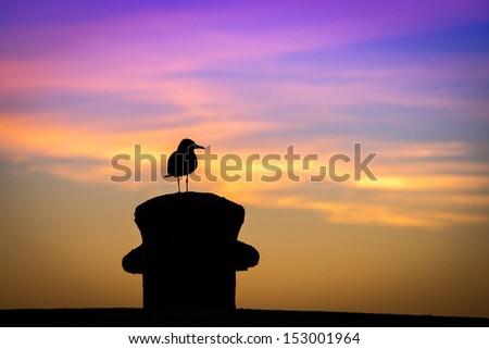 Silhouette of a bird, Key West, Monroe County, Florida, USA - stock photo