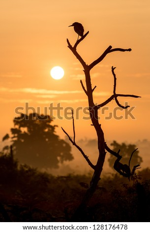 Silhouette of a bird on a branch at sunrise - stock photo