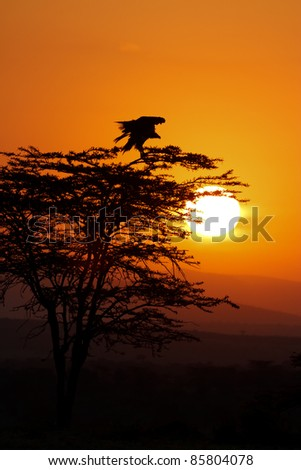 Silhouette of a bird with outstrechted wings atop a tree at sunrise - stock photo