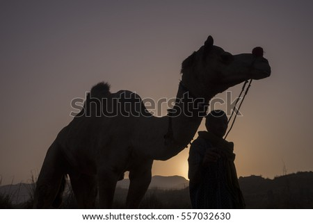 silhouette of a camel and the rider during sunset.