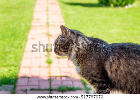 Silhouette of a cat near road