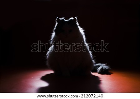 silhouette of a cat on a dark background