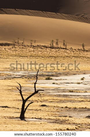 Silhouette of a dead tree in Namib-Naukluft National Park, Namibia, Southern Africa - stock photo