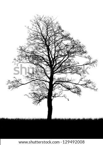 silhouette of a dead tree isolated on white - stock photo