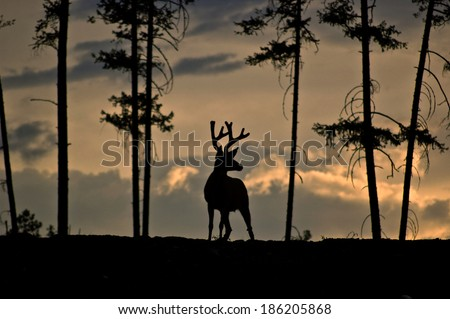 Silhouette of a deer against a stormy sky and framed by trees - stock photo