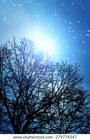 Silhouette of a defocused tree with sharp stars. Stars are digital illustration.