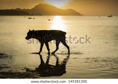 Silhouette of a dog walking on the beach at sunrise