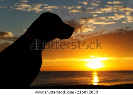 silhouette of a dogs head with the sun rising from the sea in the background - stock photo