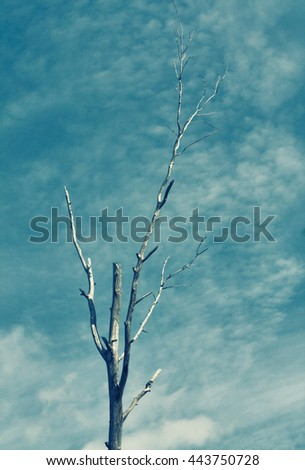 silhouette of a dry tree against blue sky - stock photo