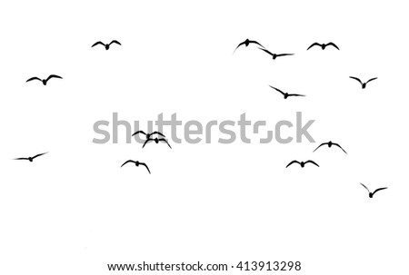 silhouette of a flock of birds on a white background - stock photo