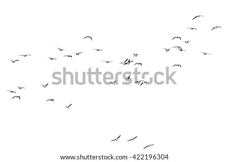 silhouette of a flock of birds on a white background
