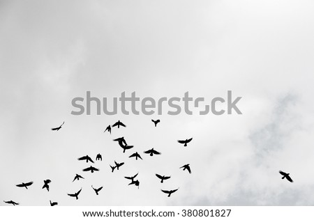 Silhouette of a flock of crows flying up into a cloudy sky.
