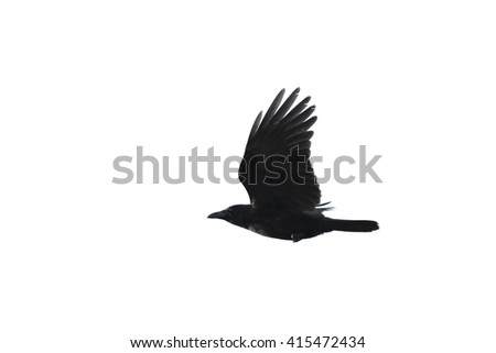 Silhouette of a flying crow isolated against white background - stock photo