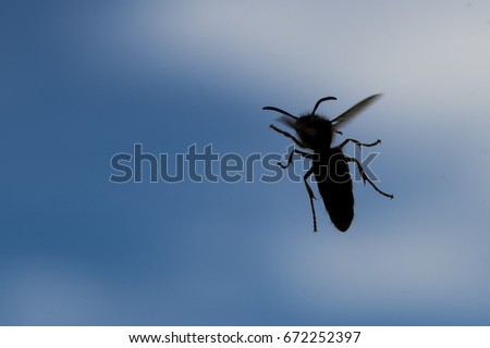 Silhouette of a hornet against the sky. Sky is partially cloudy. Closeup view. Room for text.