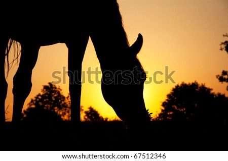 Silhouette of a horse grazing against rising sun - stock photo