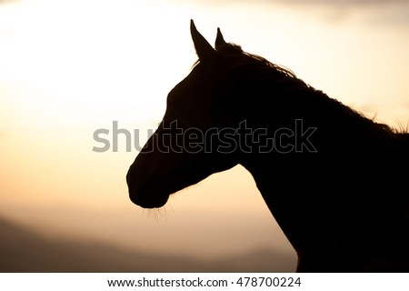 Silhouette of a horse in the sunset