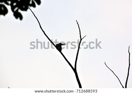silhouette of a kingfisher bird on a barren tree branch