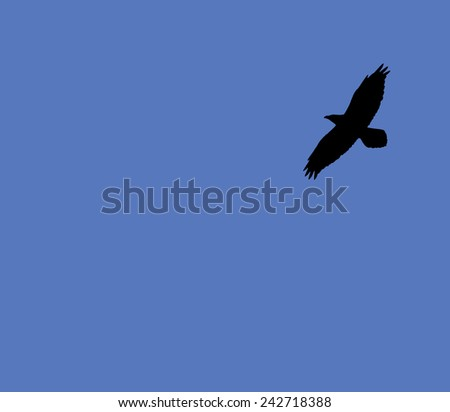 Silhouette of a large bird soaring against a blue sky. - stock photo