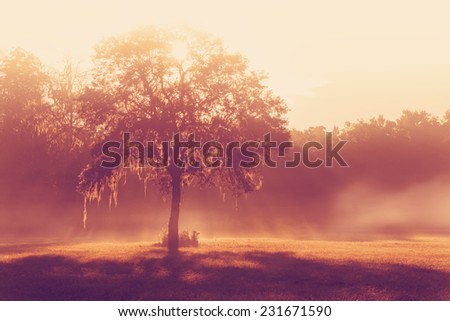 Silhouette of a lone tree in a field early at sunrise or sunset with sun beams mist and fog with a retro vintage filter to feel inspirational rural peaceful meditative - stock photo