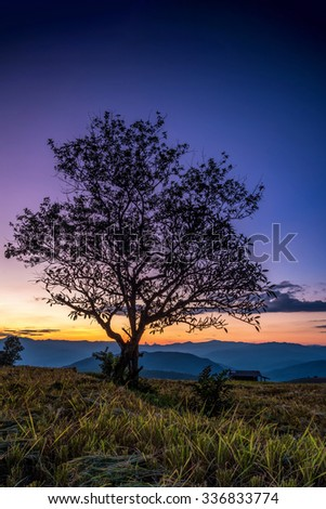 Silhouette of a lonely tree on the field against sunset. - stock photo
