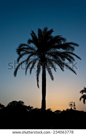 Silhouette of a palm in Sevilla, Spain