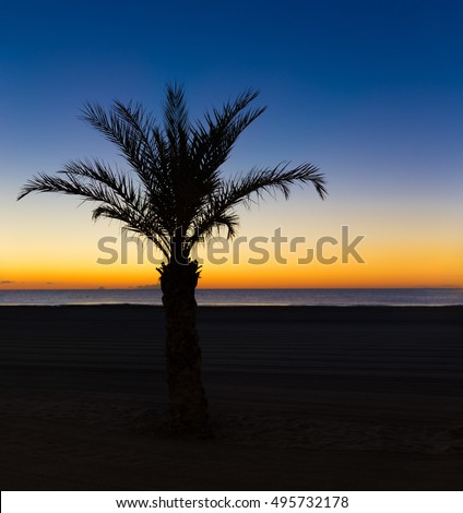 Silhouette of a palm tree on the beach in Valencia in Spain at sunset
