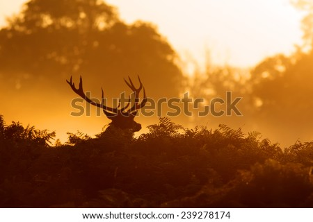 silhouette of a red deer stag in the morning mist - stock photo